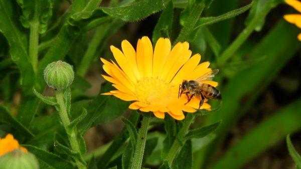 Ein Besuch bei den Bienen