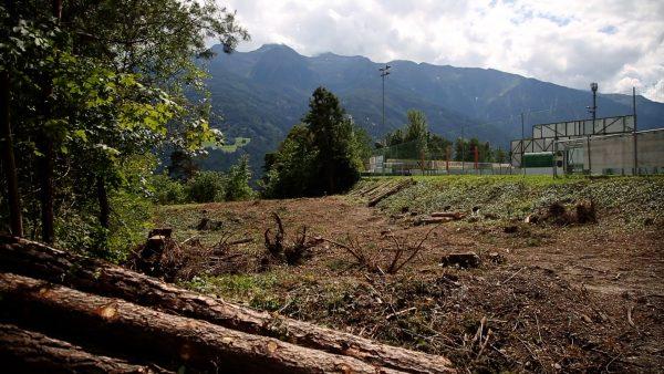 Waldrodung für Parkplatz beim Fußballplatz in Telfs