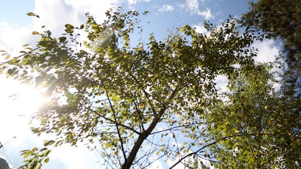 Neue Bäume fürs Emat