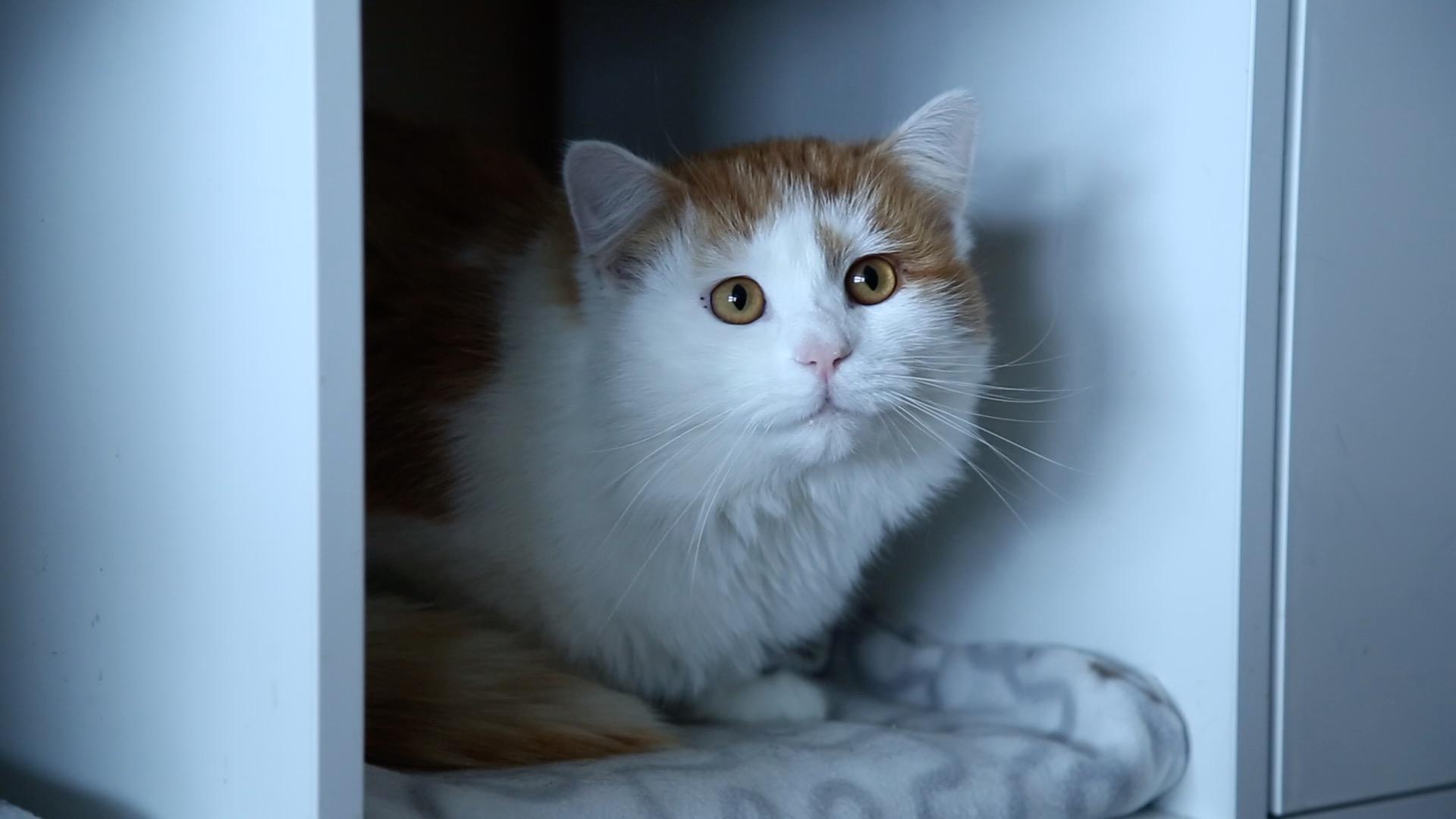 Allerhand aus'm Tyroler Land: Tirols erstes Katzenseniorenheim