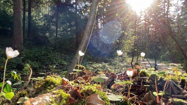 Allerhand aus'm Tyroler Land: Waldspaziergang