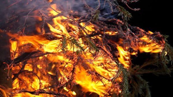Christbaum brandgefährlich