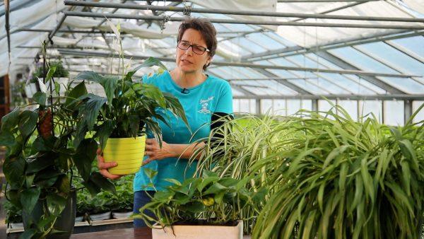 Tirol blüht auf - Pflanzentipp Nr. 5