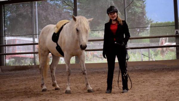 2. Platz für Video vom Ponyhof Lipp