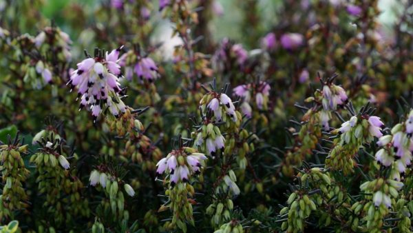 Tirol blüht auf - Pflanzen für Bienen, Hummeln und Schmetterlinge