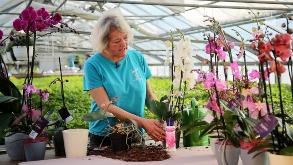 Tirol blüht auf - die Königin der Blumen