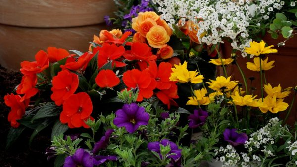 Tirol blüht auf: Pflanzen und Farbkombinationen